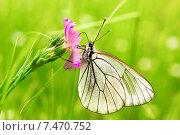 Бабочка. Стоковое фото, фотограф Антон Юрченков / Фотобанк Лори