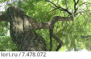 Купить «Блики воды на коре дерева. Склоненное над водой дерево.», видеоролик № 7478072, снято 25 мая 2015 г. (c) Звездочка ясная / Фотобанк Лори