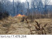 Начинающийся пожар в лесу. Стоковое фото, фотограф Ирина Буржинская / Фотобанк Лори