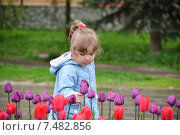 Купить «Двухлетняя девочка играет около клумбы с тюльпанами в летнем парке», фото № 7482856, снято 15 мая 2015 г. (c) Володина Ольга / Фотобанк Лори