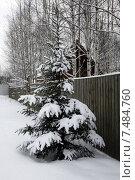 Ель под снегом у забора на дачном участке (2015 год). Стоковое фото, фотограф Lana / Фотобанк Лори