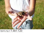 Купить «Лягушка в руках девочки», фото № 7487120, снято 25 июля 2014 г. (c) Сергей Рыжов / Фотобанк Лори