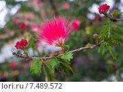 Купить «Розовый цветок на верке дерева», фото № 7489572, снято 1 ноября 2014 г. (c) Василий Кочетков / Фотобанк Лори