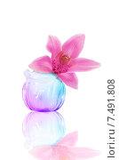 Стеклянная маленькая ваза с орхидеей. Стоковое фото, фотограф Оксана Дорохина / Фотобанк Лори