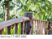 Купить «wooden fence at tropical woods or park», фото № 7497660, снято 15 февраля 2015 г. (c) Syda Productions / Фотобанк Лори