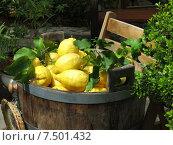 Итальянские лимоны. Стоковое фото, фотограф Елена Утенкова / Фотобанк Лори