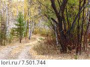 Купить «Дорога в осеннем  лесу. Забайкальский край», эксклюзивное фото № 7501744, снято 26 сентября 2007 г. (c) Александр Щепин / Фотобанк Лори