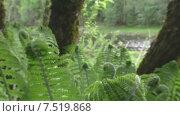 Купить «Папоротник. Вид на реку.», видеоролик № 7519868, снято 3 июня 2015 г. (c) Звездочка ясная / Фотобанк Лори