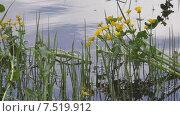 Купить «Купальница», видеоролик № 7519912, снято 3 июня 2015 г. (c) Звездочка ясная / Фотобанк Лори