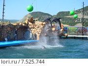 Купить «Анапский Утришский дельфинарий. Шоу морских млекопитающих», фото № 7525744, снято 6 июня 2015 г. (c) Игорь Архипов / Фотобанк Лори