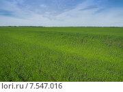 Колхозное поле. Стоковое фото, фотограф Аркадий Рыпин / Фотобанк Лори