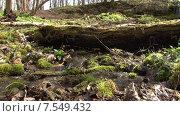 Купить «Ручей из-под бревна. Пущино», видеоролик № 7549432, снято 16 июля 2020 г. (c) Mike The / Фотобанк Лори