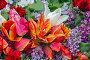 Тюльпаны разных цветов, фото № 7550200, снято 12 мая 2015 г. (c) Nikolay Sukhorukov / Фотобанк Лори