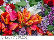 Купить «Тюльпаны разных цветов», фото № 7550200, снято 12 мая 2015 г. (c) Nikolay Sukhorukov / Фотобанк Лори