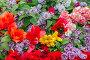 Фон их цветов гвоздики, сирени и тюльпанов, фото № 7550212, снято 12 мая 2015 г. (c) Nikolay Sukhorukov / Фотобанк Лори