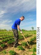 Мужчина окучивает картофель. Стоковое фото, фотограф Арестов Андрей Павлович / Фотобанк Лори