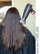 Купить «stylist hand with fan dries woman hair at salon», фото № 7555256, снято 15 февраля 2015 г. (c) Syda Productions / Фотобанк Лори
