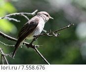 Соловей на ветке дерева. Стоковое фото, фотограф Лукьянов Павел / Фотобанк Лори