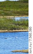 Чайка над озером в поисках пищи. Стоковое фото, фотограф Николай Новиков / Фотобанк Лори