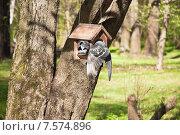 Купить «Голуби в кормушке», эксклюзивное фото № 7574896, снято 7 мая 2015 г. (c) Алёшина Оксана / Фотобанк Лори