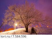 Купить «Тамбовский иней», фото № 7584596, снято 17 января 2015 г. (c) Карелин Д.А. / Фотобанк Лори