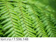Купить «Close up of fern leaves», фото № 7596148, снято 2 августа 2014 г. (c) Elnur / Фотобанк Лори