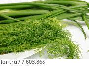 Купить «Свежий зеленый укроп и лук», эксклюзивное фото № 7603868, снято 22 июня 2015 г. (c) Яна Королёва / Фотобанк Лори