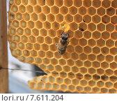 Пчела, пьющая каплю меда. Стоковое фото, фотограф Денис Кошель / Фотобанк Лори