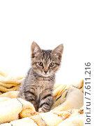 Маленький серый полосатый котенок на желтом покрывале. Стоковое фото, фотограф Владимир Ходатаев / Фотобанк Лори