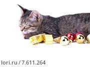 Серый полосатый котенок лижет лапу. Стоковое фото, фотограф Владимир Ходатаев / Фотобанк Лори