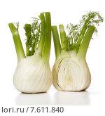Купить «Fresh fennel bulb isolated on white background close up», фото № 7611840, снято 10 февраля 2015 г. (c) Natalja Stotika / Фотобанк Лори