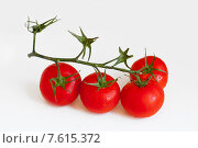 Купить «Спелые томаты на ветке», фото № 7615372, снято 28 июня 2015 г. (c) Татьяна Едренкина / Фотобанк Лори