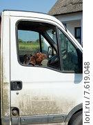 Купить «Венгерский поинтер  смотрит из окна машины», фото № 7619048, снято 6 июня 2013 г. (c) Татьяна Кахилл / Фотобанк Лори