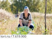 Женщина на грядке с капустой. Стоковое фото, фотограф Евгений Чернецов / Фотобанк Лори