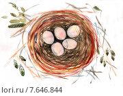 Гнездо, акварельный рисунок. Стоковая иллюстрация, иллюстратор Марина Комиссарова / Фотобанк Лори