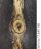 Купить «Смолистый сучёк в старой почерневшей доске», фото № 7647168, снято 5 июля 2015 г. (c) Ельцов Владимир / Фотобанк Лори