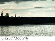 Купить «Ducks swimming in a lake, Lake of The Woods, Ontario, Canada», фото № 7650516, снято 6 июля 2013 г. (c) Ingram Publishing / Фотобанк Лори
