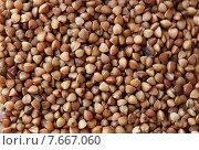 Купить «whole buckwheat grain texture», фото № 7667060, снято 14 мая 2015 г. (c) Syda Productions / Фотобанк Лори