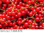 Купить «Красная смородина. Фон», фото № 7668876, снято 9 июля 2015 г. (c) Зобков Георгий / Фотобанк Лори