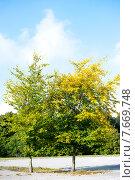 Купить «Деревья осенью», фото № 7669748, снято 16 сентября 2014 г. (c) Татьяна Кахилл / Фотобанк Лори