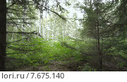 Лес летом. Стоковое видео, видеограф Рамиль Бакиров / Фотобанк Лори