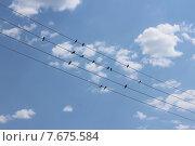 Ласточки на проводах. Стоковое фото, фотограф Сергей Плохов / Фотобанк Лори