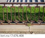 Ржавая изгородь. Стоковое фото, фотограф Александр Акимцев / Фотобанк Лори