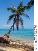 Песчаный пляж с кокосовой пальмой (2015 год). Стоковое фото, фотограф Andrei Leventcov / Фотобанк Лори