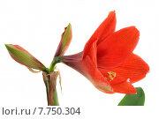 Купить «nature plant flower open growth», фото № 7750304, снято 1 июня 2020 г. (c) PantherMedia / Фотобанк Лори