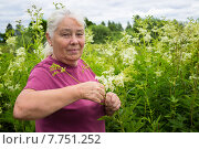Купить «Женщина на  заготовке цветов таволги», фото № 7751252, снято 30 июня 2015 г. (c) Александр Романов / Фотобанк Лори