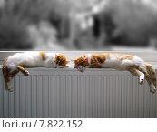 red cat cats colorkey weiss. Стоковое фото, фотограф Klaus Schönepauck / PantherMedia / Фотобанк Лори