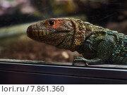 Рептилия. Стоковое фото, фотограф Денис Шелехов / Фотобанк Лори