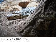 Крокодил. Стоковое фото, фотограф Денис Шелехов / Фотобанк Лори