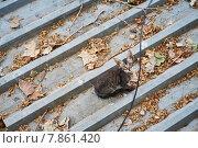 Кошка на крыше. Стоковое фото, фотограф Денис Шелехов / Фотобанк Лори